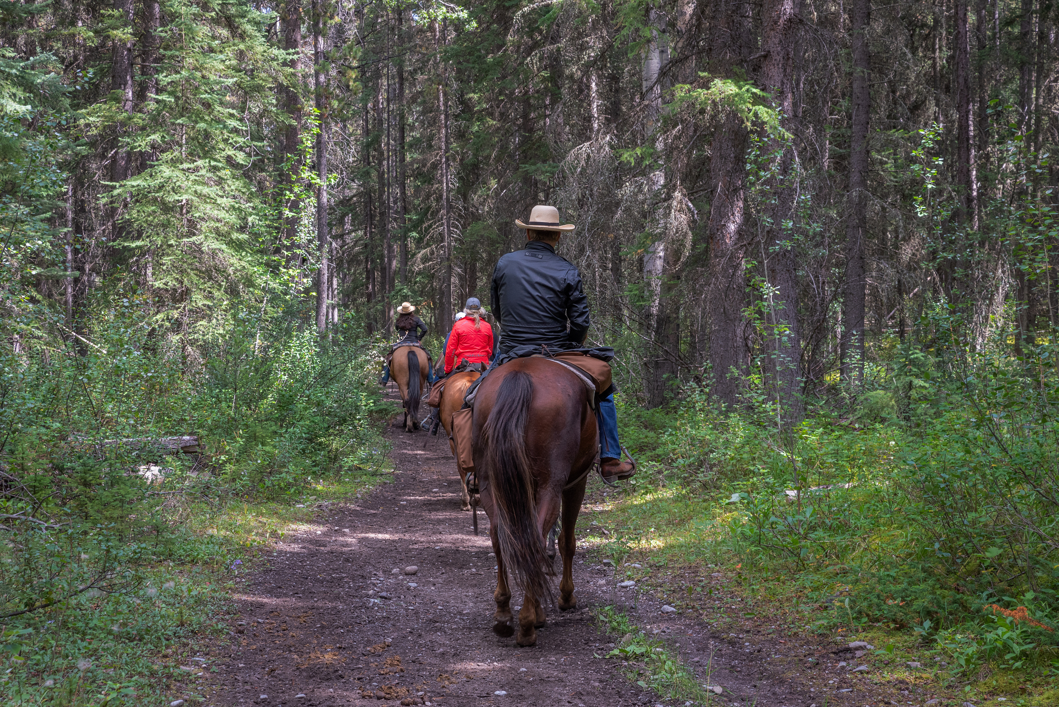 Trail Riders in a Forest